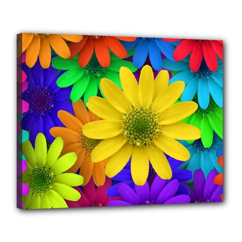 Gerbera Daisies Canvas 20  X 16  (framed) by StuffOrSomething