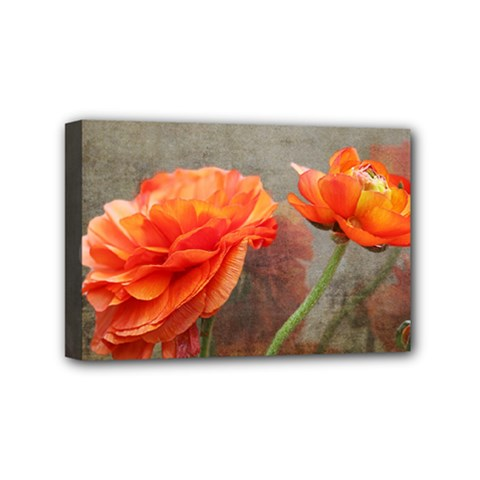 Orange Rose From Bud To Bloom Mini Canvas 6  X 4  (framed) by NaturesSol
