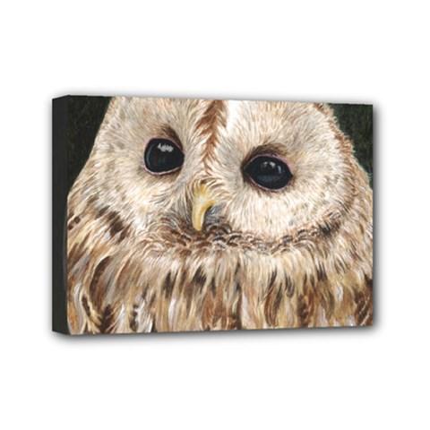 Tawny Owl Mini Canvas 7  X 5  (framed) by TonyaButcher