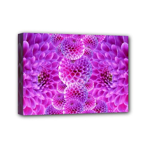 Purple Dahlias Mini Canvas 7  X 5  (framed) by FunWithFibro