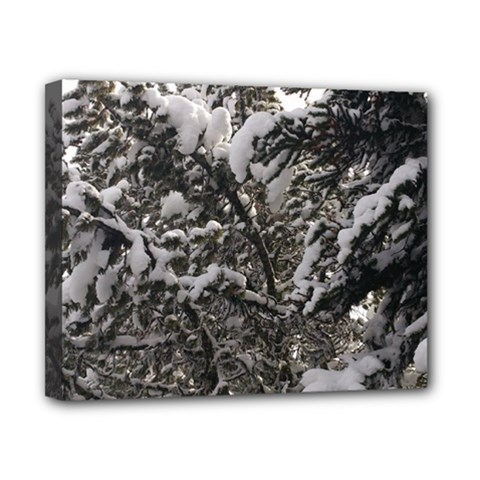 Snowy Trees Canvas 10  X 8  (framed) by DmitrysTravels
