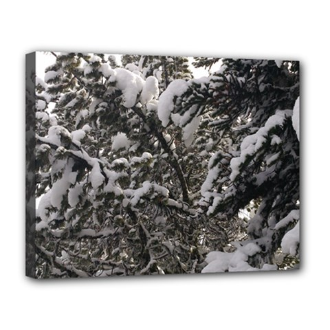 Snowy Trees Canvas 14  X 11  (framed) by DmitrysTravels