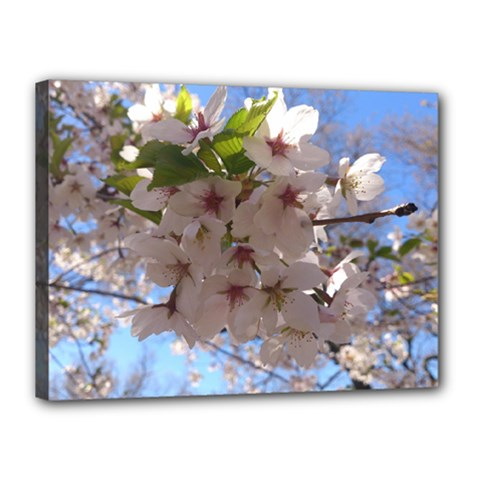 Sakura Canvas 16  X 12  (framed) by DmitrysTravels