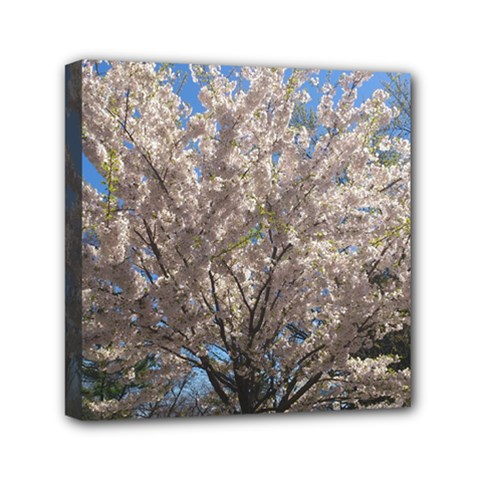 Cherry Blossoms Tree Mini Canvas 6  X 6  (framed) by DmitrysTravels