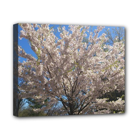 Cherry Blossoms Tree Canvas 10  X 8  (framed) by DmitrysTravels