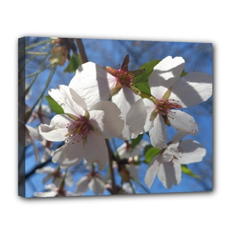 Cherry Blossoms Canvas 14  X 11  (framed) by DmitrysTravels