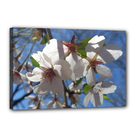 Cherry Blossoms Canvas 18  X 12  (framed) by DmitrysTravels