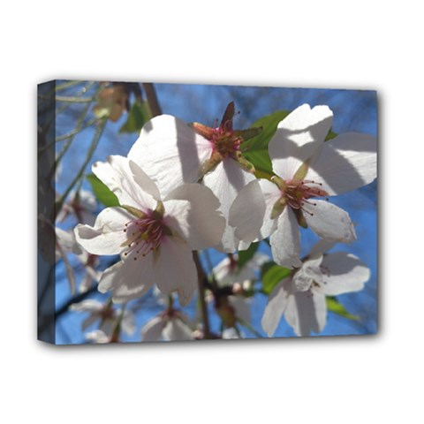 Cherry Blossoms Deluxe Canvas 16  X 12  (framed)