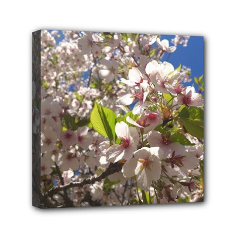 Cherry Blossoms Mini Canvas 6  X 6  (framed) by DmitrysTravels