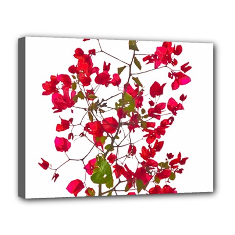 Red Petals Canvas 14  X 11  (framed) by dflcprints