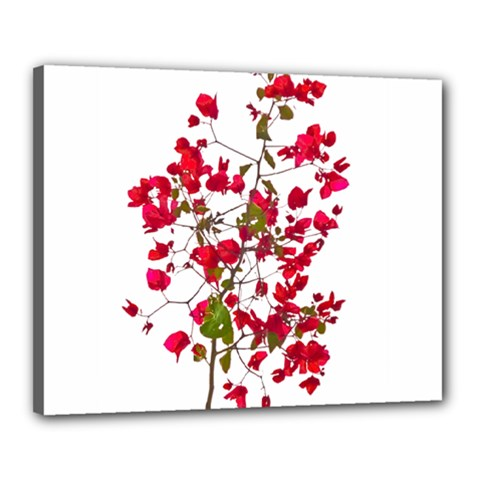 Red Petals Canvas 20  X 16  (framed) by dflcprints