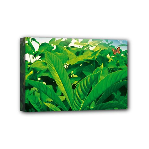 Nature Day Mini Canvas 6  X 4  (framed) by dflcprints