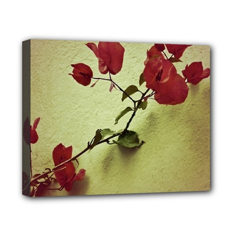 Santa Rita Flower Canvas 10  X 8  (framed) by dflcprints