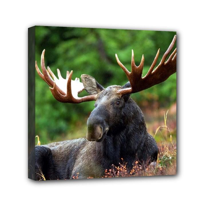 Majestic Moose Mini Canvas 6  x 6  (Framed)