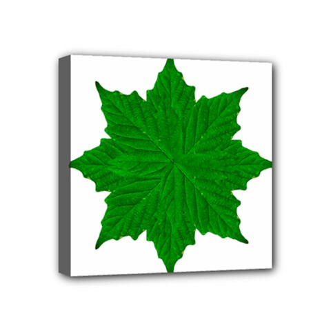 Decorative Ornament Isolated Plants Mini Canvas 4  X 4  (framed) by dflcprints