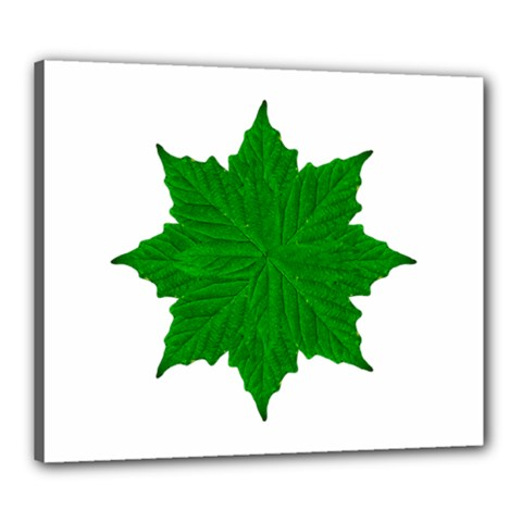 Decorative Ornament Isolated Plants Canvas 24  X 20  (framed) by dflcprints