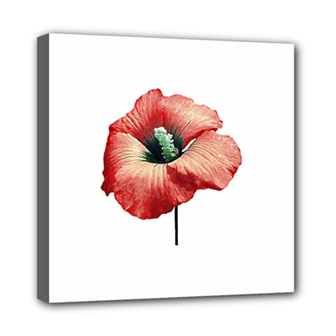 Your Flower Perfume Mini Canvas 8  X 8  (framed) by dflcprints