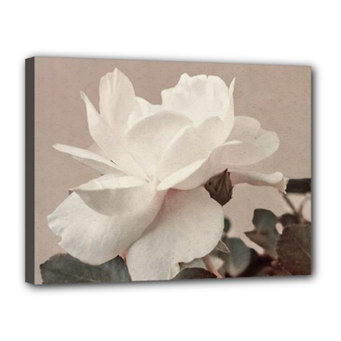 White Rose Vintage Style Photo In Ocher Colors Canvas 16  X 12  (framed) by dflcprints