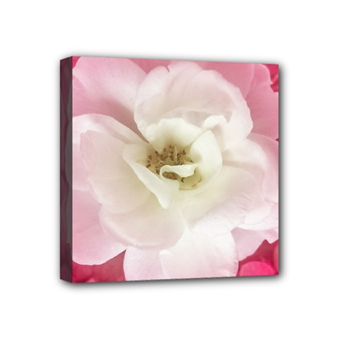White Rose With Pink Leaves Around  Mini Canvas 4  X 4  (framed) by dflcprints