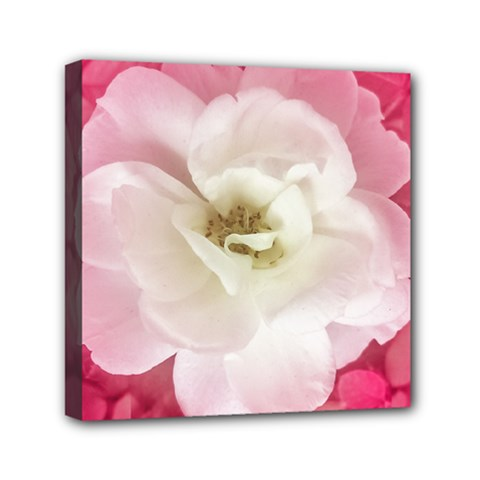 White Rose With Pink Leaves Around  Mini Canvas 6  X 6  (framed) by dflcprints