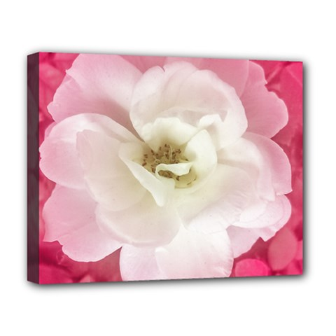 White Rose With Pink Leaves Around  Deluxe Canvas 20  X 16  (framed) by dflcprints