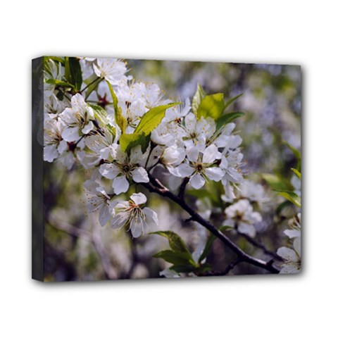 Apple Blossoms Canvas 10  X 8  (framed) by bloomingvinedesign