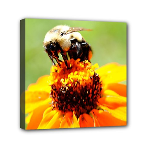 Bee On A Flower Mini Canvas 6  X 6  (framed) by bloomingvinedesign