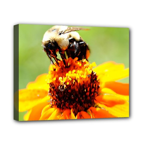 Bee On A Flower Canvas 10  X 8  (framed) by bloomingvinedesign