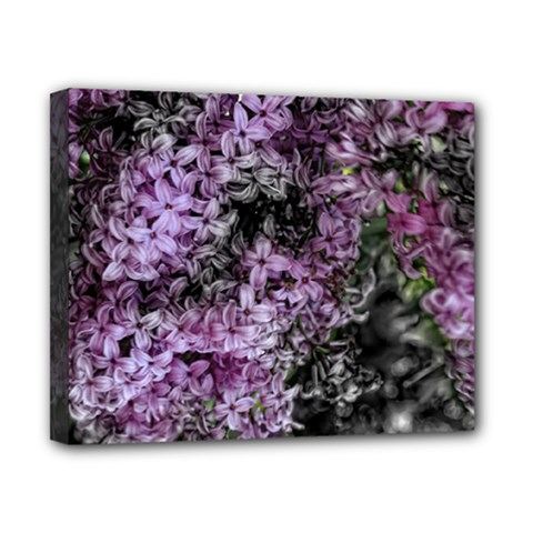 Lilacs Fade To Black And White Canvas 10  X 8  (framed) by bloomingvinedesign