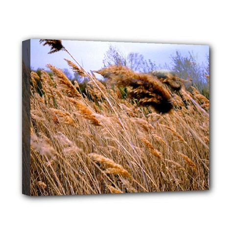 Blowing Prairie Grass Canvas 10  X 8  (framed) by bloomingvinedesign