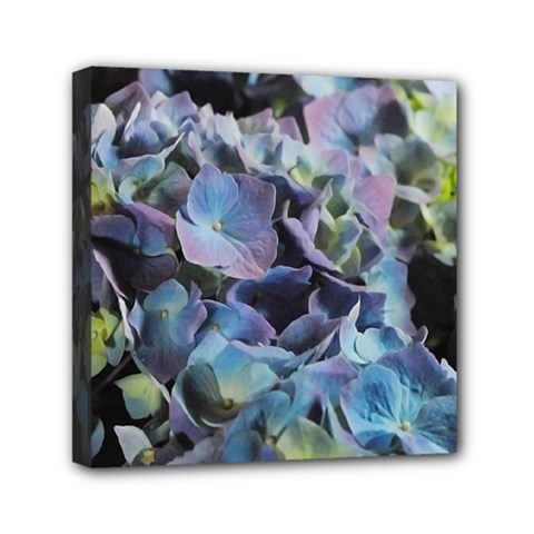 Blue and Purple Hydrangea Group Mini Canvas 6  x 6  (Framed) by bloomingvinedesign