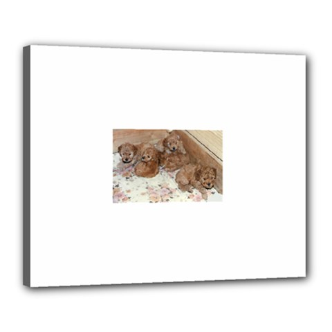 Apricot Poodle Pups Canvas 20  x 16  (Framed) by TailWags