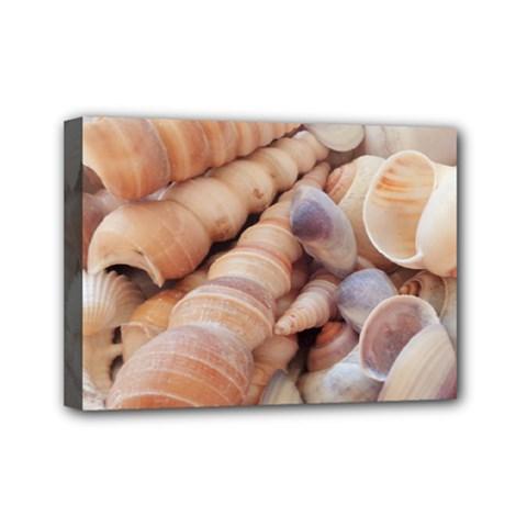Seashells 3000 4000 Mini Canvas 7  X 5  (framed) by yoursparklingshop