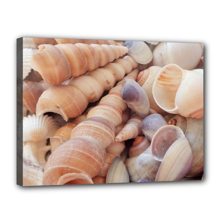 Seashells 3000 4000 Canvas 16  x 12  (Framed)