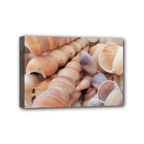 Sea Shells Mini Canvas 6  X 4  (framed) by yoursparklingshop