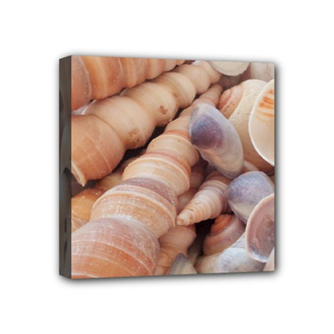 Sea Shells Mini Canvas 4  X 4  (framed) by yoursparklingshop