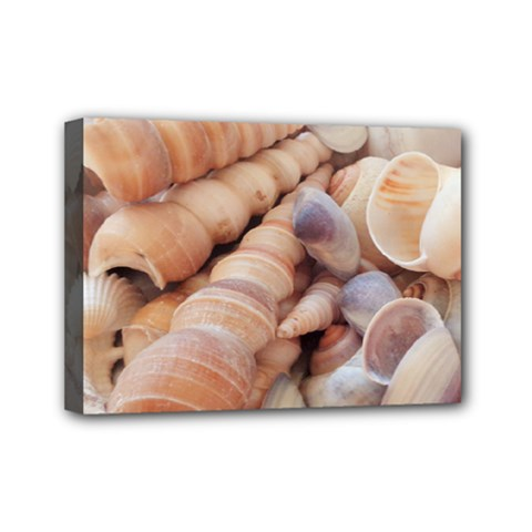 Sea Shells Mini Canvas 7  X 5  (framed) by yoursparklingshop