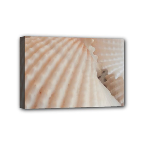 Sunny White Seashells Mini Canvas 6  X 4  (framed) by yoursparklingshop