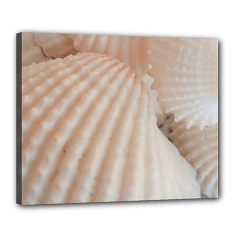 Sunny White Seashells Canvas 20  X 16  (framed)