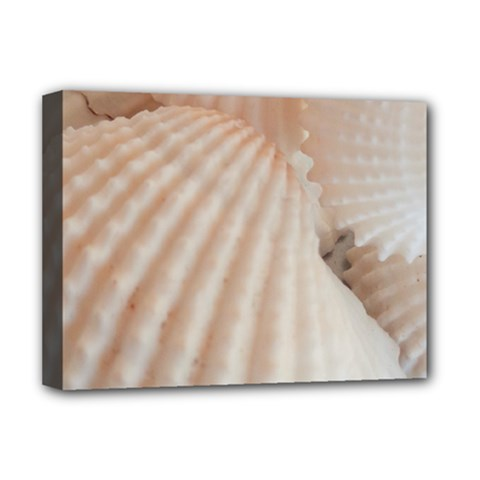 Sunny White Seashells Deluxe Canvas 16  X 12  (framed)  by yoursparklingshop