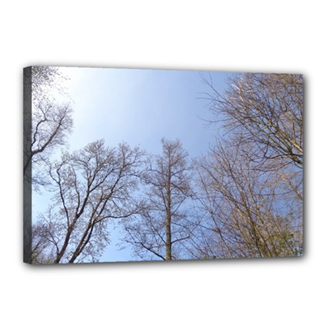 Large Trees in Sky Canvas 18  x 12  (Framed) by yoursparklingshop