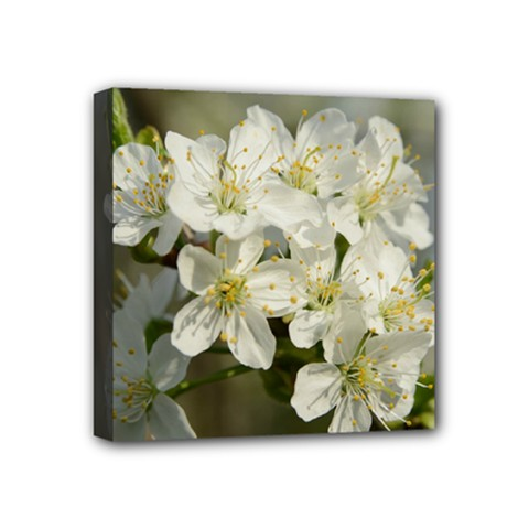 Spring Flowers Mini Canvas 4  X 4  (framed) by anstey