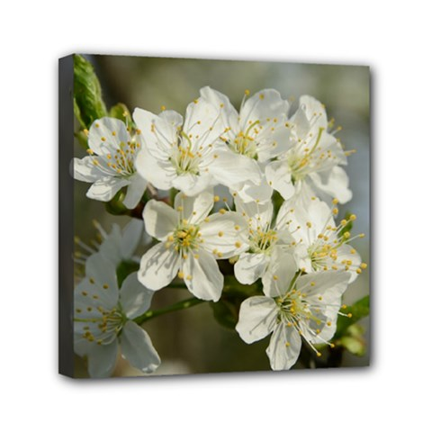 Spring Flowers Mini Canvas 6  X 6  (framed) by anstey