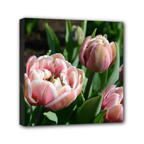 Tulips Mini Canvas 6  X 6  (framed) by anstey
