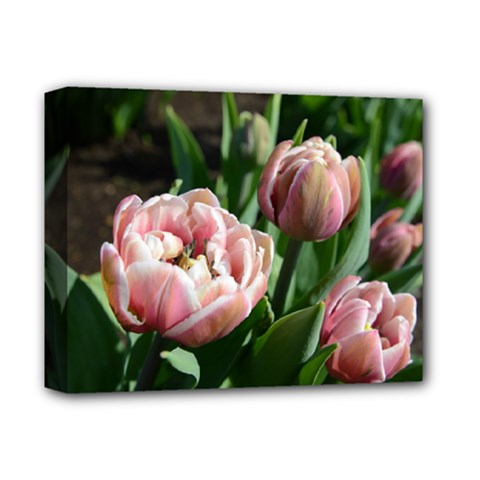 Tulips Deluxe Canvas 14  X 11  (framed) by anstey