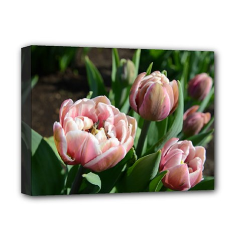 Tulips Deluxe Canvas 16  X 12  (framed)  by anstey