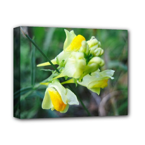 Linaria Flower Deluxe Canvas 14  X 11  (framed) by ansteybeta