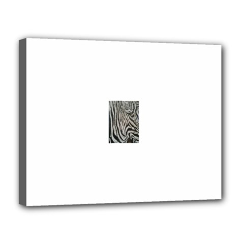 Unique Zebra Design Canvas 14  X 11  by timelessartoncanvas
