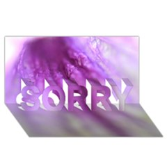 Purple Flower Pedal Sorry 3d Greeting Card (8x4)