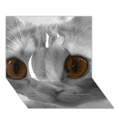 Funny Cat Apple 3d Greeting Card (7x5)
